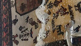 Pet Odor Removal From Rug
