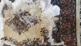 Pet Stain Removal From Rug