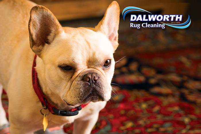 Dalworth Rug Cleaning Wag-n-Wash in Euless, TX
