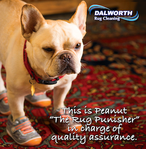 Pets Stain Removal in Dallas and Fort Worth