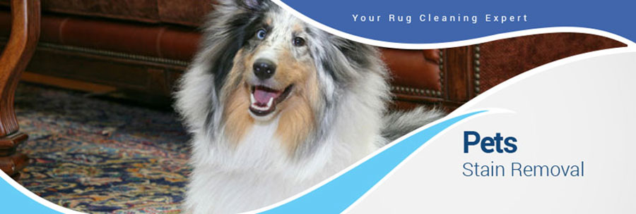 Area Rug Pet Stain Removal in the Dallas Fort Worth Area