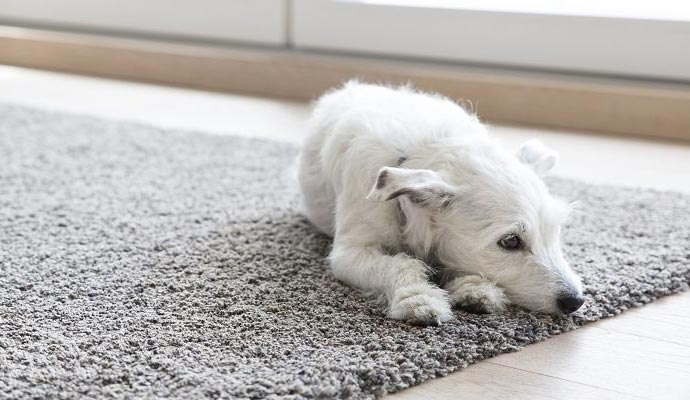 Pet Odor Removal Treatment