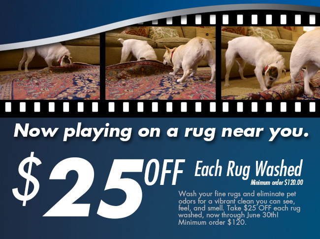 current area rug cleaning offer